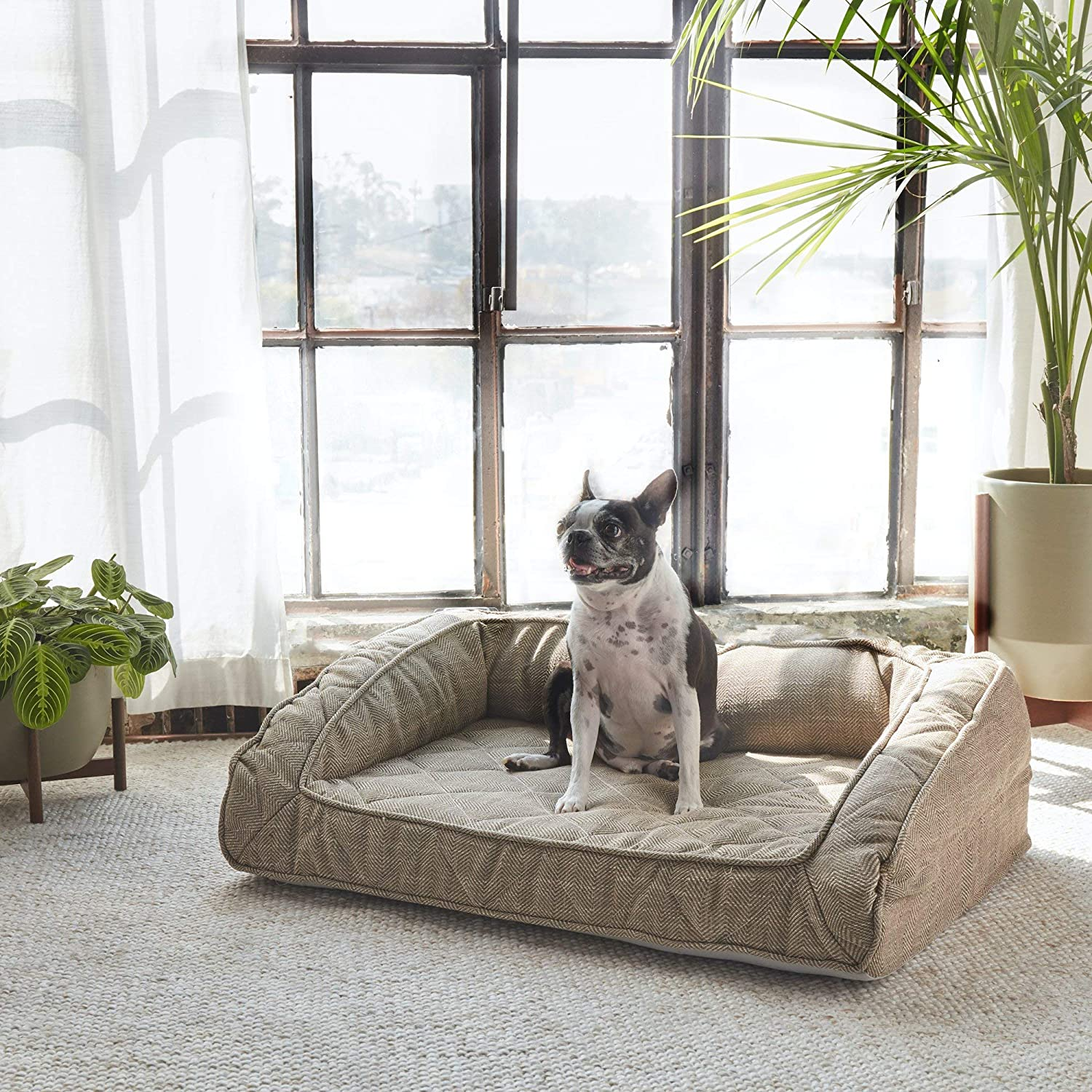 Top 10 Best Dog Couch in 2020 Reviews | Buyer's Guide