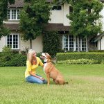 Best Petsafe Wireless fences In 2019 Reviews | Buyer's Guide